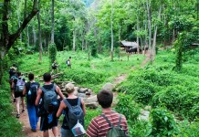 จะไปเที่ยวป่าต้องเตรียมตัวอย่างไร, เที่ยวป่า, เตรียมตัว, ป่าไม้, ป่า, ทรัพยากรป่าไม้, สัตว์, สัตว์สงวน, อุปกรณ์เดินป่า, กล้วยไม้ป่า, สัตว์ป่าคุ้มครอง, ป่าดิบชื้น, ป่าพรุ, ป่าดิบเขา, Tree