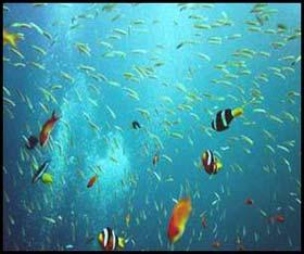 เกาะช้าง, ที่พักเกาะช้าง, แผนที่เกาะช้าง, ท่องเที่ยวเกาะช้าง, เกาะช้าง ตราด, ทะเล เกาะช้าง, ดำน้ำ เกาะช้าง, ปะการัง เกาะช้าง