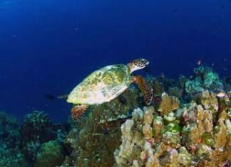 อุทยานแห่งชาติหมู่เกาะสิมิลัน, หมู่เกาะสิมิลัน, เกาะสิมิลัน, สิมิลัน, ที่พักหมู่เกาะสิมิลัน, แผนที่หมู่เกาะสิมิลัน, สถานที่ท่องเที่ยว, ทะเล, ดำน้ำ, ปะการัง, พังงา