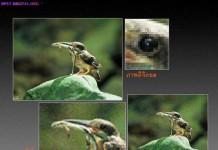 Light to Pixels, กล้องดิจิตอล, ภาพถ่าย, กล้อง digital, pixel shader, เลนส์, เลนส์กล้อง
