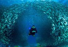 การดำน้ำแบบ Scuba Diving, การดำน้ำ, ดำน้ำ, อุปกรณ์ดำน้ำ, ดำน้ำลึก, ทะเล, ดำน้ำ พัทยา, ฝึกดำน้ำ, Scuba diving, Skin diving