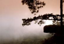 ป่าสนผสม, ป่าสน, tree, กล้วยไม้ป่า, อุปกรณ์เดิน, เดินป่า, เขื่อนป่าสักชลสิทธิ์, วัดป่า, เงาะป่า, ป่าชายเลน, ป่าดงดอย, natural, forest, ภูกระดึง, น้ำหนาว