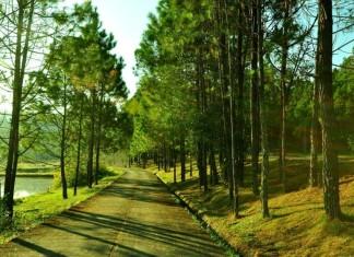 ป่าแบบต่างๆในเมืองไทย