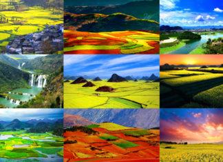 ทริปยูนนาน, หลัวผิง, ผู่เจ่อเฮย, ดินแดงตงชวน, คุนหมิง, มณฑลยูนนาน, ชมดอกไม้, ทริปยูนนาน, ทัวร์ยูนนาน, ท่องเที่ยวจีน, ทริปเที่ยวจีน