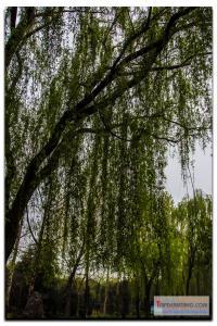 shanxi-126